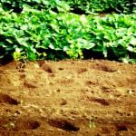 家庭菜園のできる庭